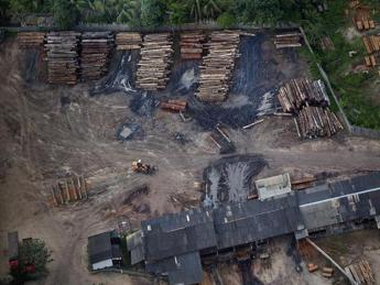 Il legno illegale contamina il mercato italiano ed europeo, la denuncia di Greenpeace