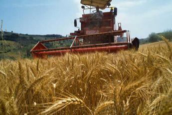Il mondo dell'agricoltura: nuovo governo abbassi tasse su lavoro e stop aumento Iva