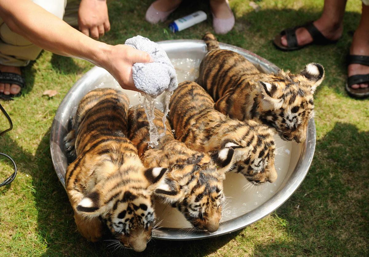 Lo Zoo è Nella Morsa Dell Afa Ecco La Doccia Per I
