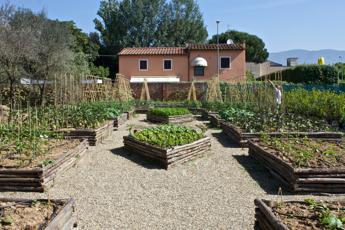 Agricoltura a scuola in affitto e per anziani impazza l for Cassoni per orto rialzato