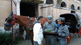 Botticelle romane, blitz nelle stalle di Testaccio: sigilli a struttura che ospitava 66 cavalli /FOTO