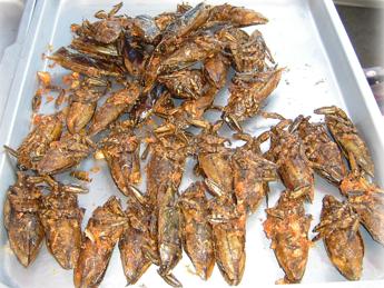 Larve al cioccolato e vodka allo scorpione, l'Umanitaria presenta gli 'edible insects' a Expo