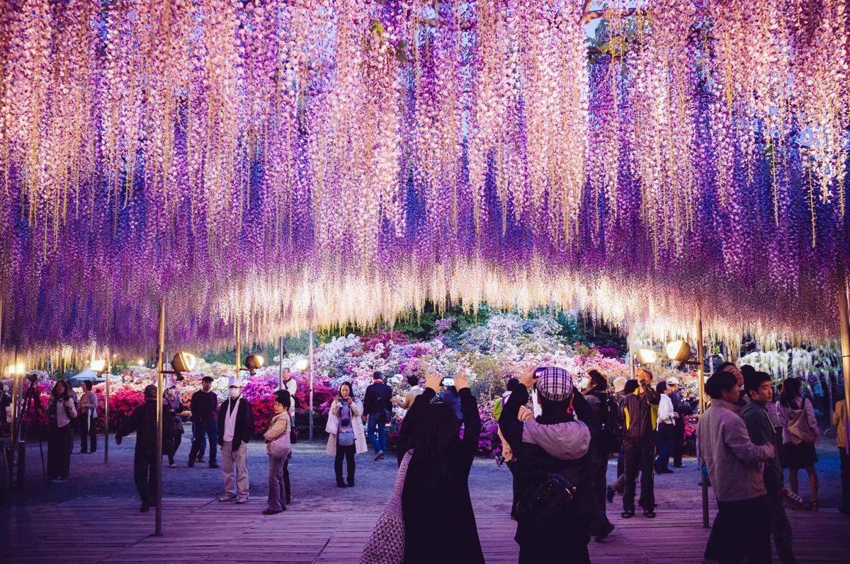 Risultati immagini per tree of life avatar ashikawa