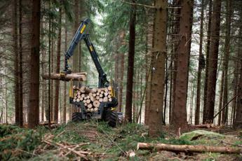 Il petrolio verde nei nostri boschi, è la biomassa legnosa /Video