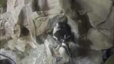 L'acquario di Genova festeggia la nascita dei gemelli pinguini
