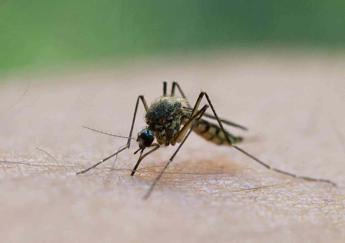 Virus del Nilo, ecco tutti i segreti per difendersi dalle zanzare
