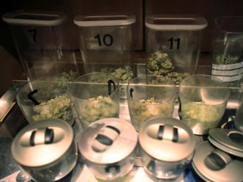 Assaggiatore di marijuana cercasi, sede di lavoro in Oregon
