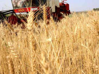 Clima, la soluzione è bio: con agricoltura naturale -36% CO2 solo in Usa