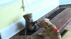 Cane e ghepardo, amici inseparabili
