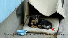 Il cane che viveva in una scatola