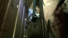 La volpe incastrata tra il muro e la recinzione