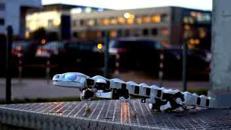 Pleurobot, il robot salamandra