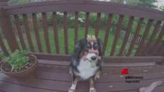 Un cane infinitamente paziente