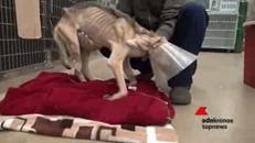La cagnolina che rischiava la morte per fame