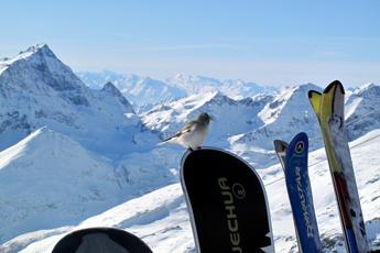 Enit: Montagna italiana attrae 3,4 mln stranieri