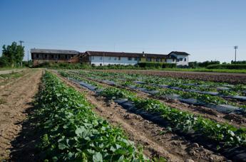 Agricoltura più sostenibile, la svolta di Syngenta