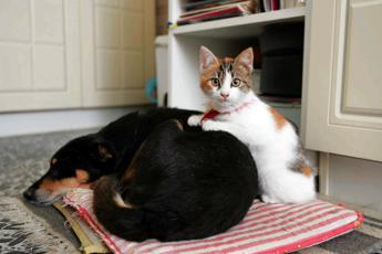 Cani vs gatti 1-0, più intelligente Fido