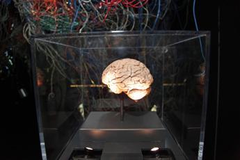 Il cervello che sogna è ozioso? Shakespeare si sbaglia: ecco perché