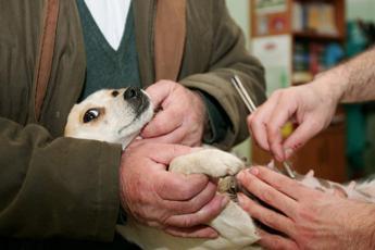 Fido quanto mi costi, 23mila firme per abbassare l'IVA sulle spese veterinarie
