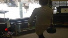 Il cervo che imita i passi di una donna