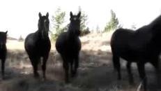 'Equinisity', dove l'uomo 'incontra' il cavallo