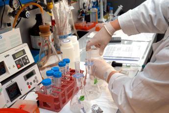 I batteri 'giusti' per vivere più di 100 anni: uno studio li cerca nell'intestino