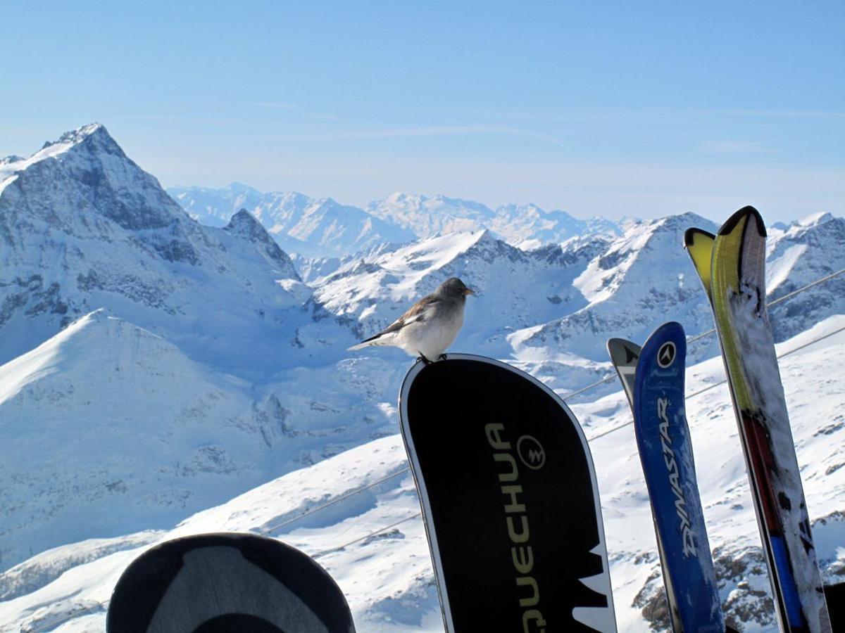 Turismo  cambiano vacanze sulla neve 5d33f1290947