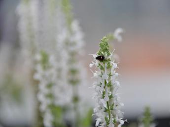 Biodiversità, dal 22 maggio il Forum Festival digitale 'Ritorno al futuro'