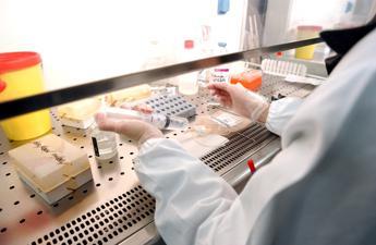 Milano 'affonda' le staminali del cancro al seno: Farmaco promettente