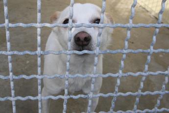 Traffico di cuccioli, 8 mila cani e gatti arrivano in Italia ogni settimana
