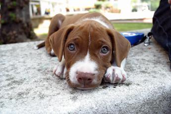 Dai cani ai rettili, occhio alle infezioni trasmesse dai 'cuccioli' di casa