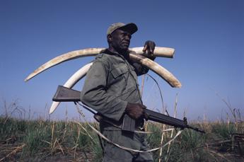 Dall'avorio alle specie protette, Cites stringe sul commercio illegale