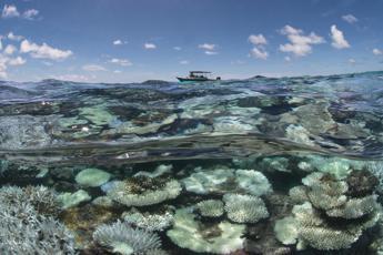 Barriere coralline addio entro il 2050 e un Mediterraneo invaso da meduse /Foto