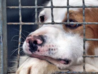 Più cani nei canili e diminuiscono le adozioni