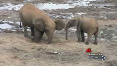 La guerra dell'avorio, 30mila elefanti uccisi ogni anno