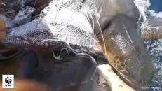 Pescatore coraggioso, si getta in acqua e salva tartaruga intrappolata