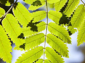 Le piante si adattano ai livelli più alti di CO2 e cresce la vegetazione
