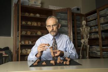 L'australopiteco Lucy morì cadendo da un albero