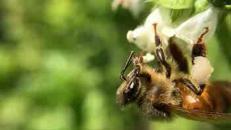L'arnia rivoluzionaria, produce miele senza danneggiare le api