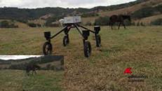 Arriva SwagBot, 'pastore' robotico