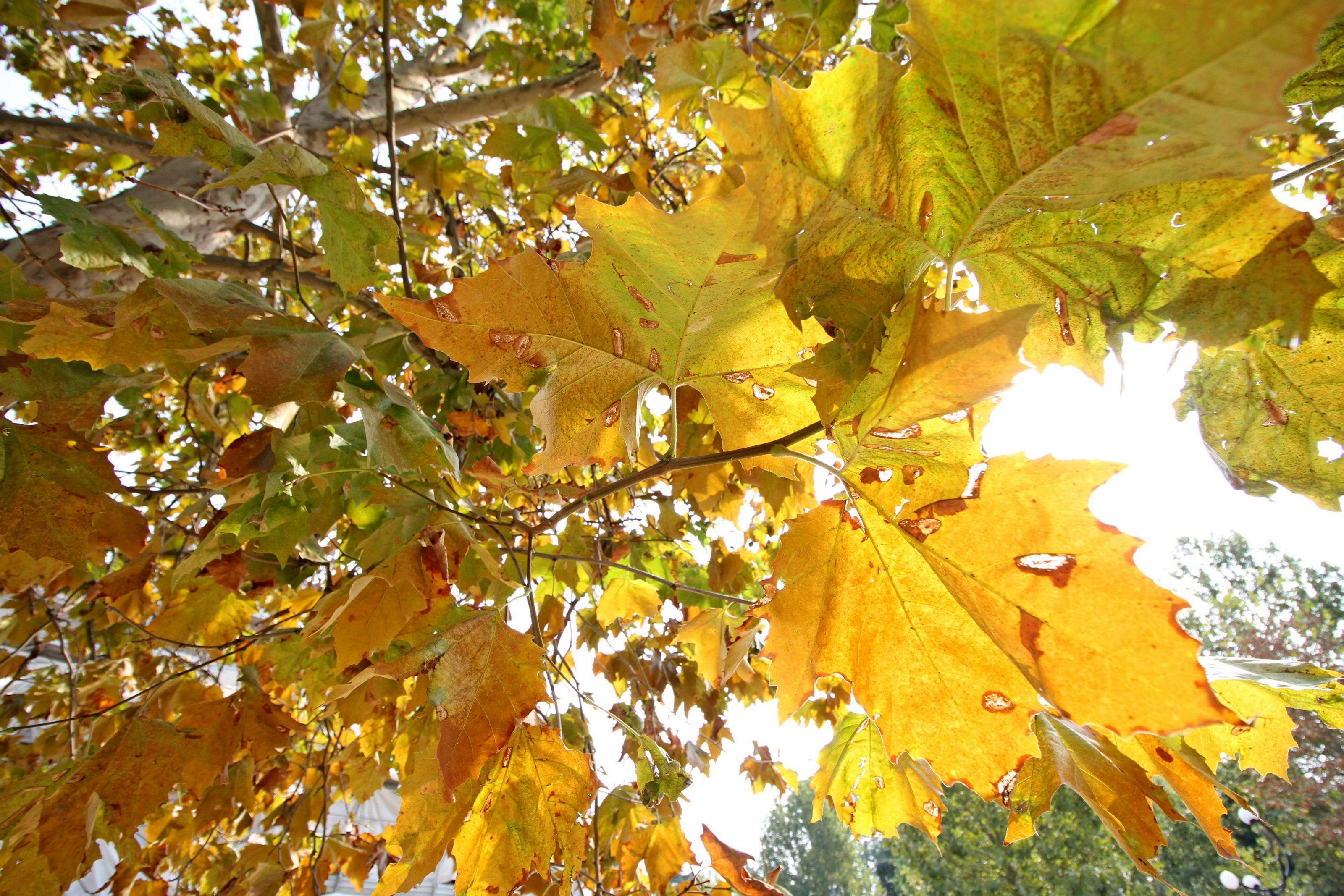 Tornano piogge e temporali ma l'autunno parte baciato dal sole