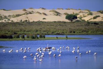 Siti Unesco a rischio, 12 in Europa di cui 3 italiani. Il più minacciato è il Coto Doñana