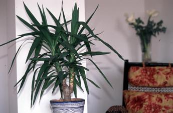 L 39 aria di casa pu essere inquinata le 5 piante che la purificano - Piante da casa che purificano l aria ...