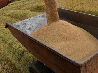 Dal riso indiano alle spezie cinesi, la mappa dell'import del bio