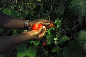 Cia, in media 400 euro di pensione per agricoltori, costretti a restare nei campi