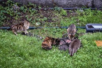 Roma. Uccideva i gatti del condominio: pensionato denunciato 0