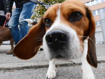 Pet therapy per combattere il Parkinson, al via percorso pilota