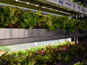 Agricoltura green, cibo sano e pulito con il Vertical Farming