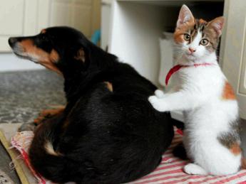 Il vademecum per viaggiare con cani e gatti