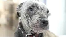 Abbandonata in campagna a morire, la ripresa della cagnolina commuove